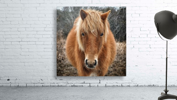 Assateague Horse Miekes NoeLani