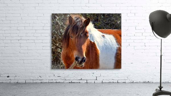 Assateague Pony Ms Macky