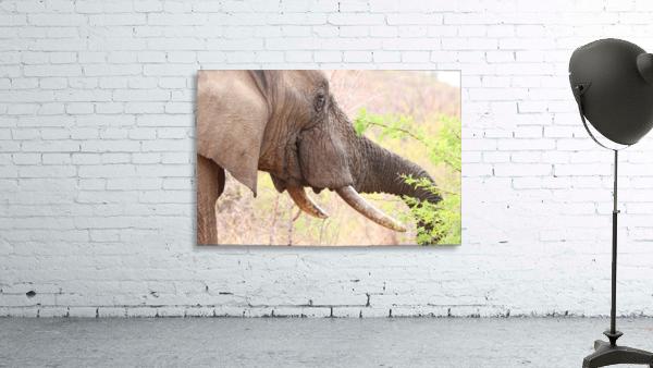 Elefant 6770
