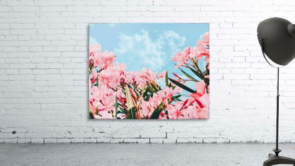 Blush Blossom II