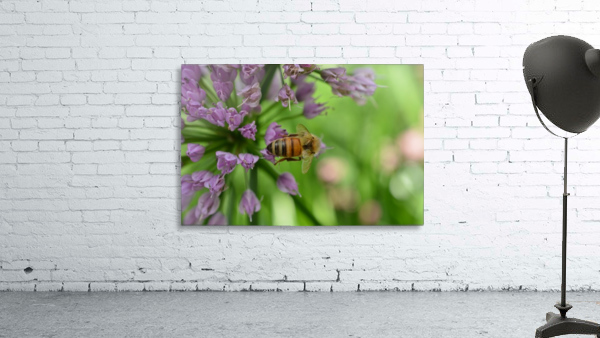 Bees & Flowers Photography