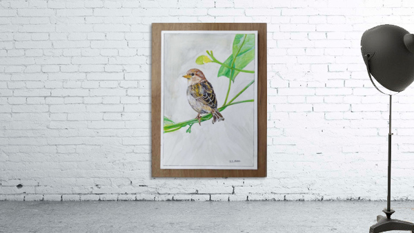 Sparrow_DKS