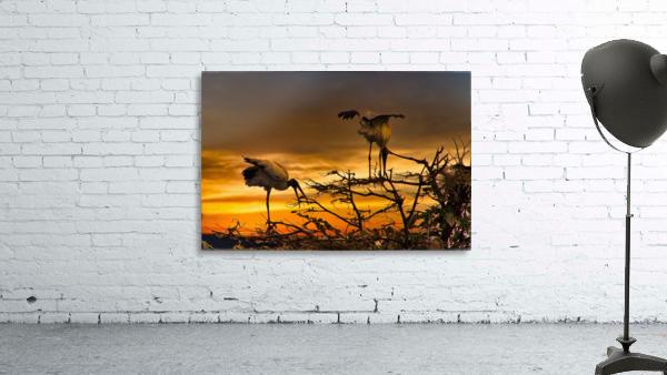 Wood Storks at Sunset
