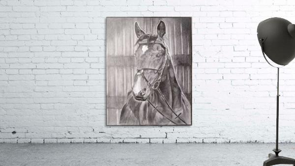Horse_DKS