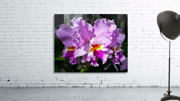 Frilly Orchid
