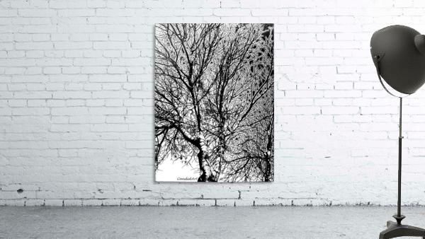 Afridaizy Black & White Trees Threshold029