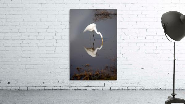 The Kiss White Egret