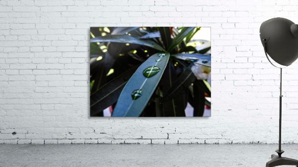 Raindrop on a green leaf