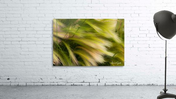 Grasses Of Summer