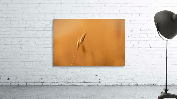 Golden Hour Grass