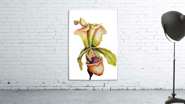 Blooming Paphiopedilum Orchids