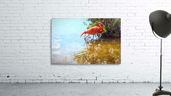 Pink Flamingo Wading In Water