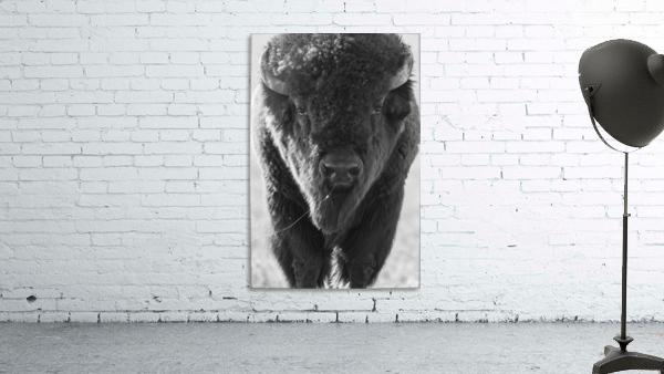 7893 - Buffalo