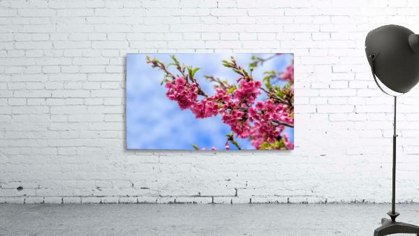 Tree XIII - Cherry tree