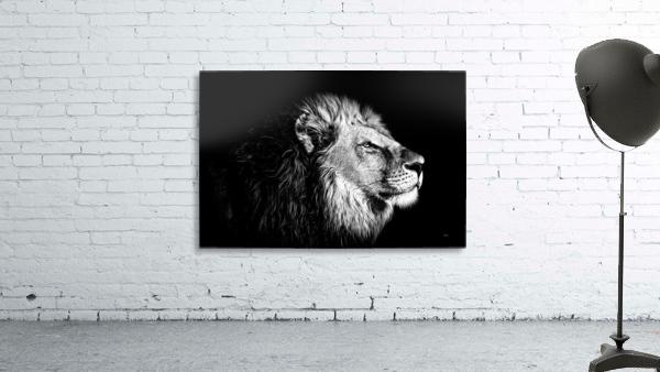 Lion with Attitude