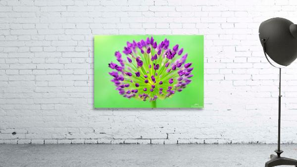 Neon Allium