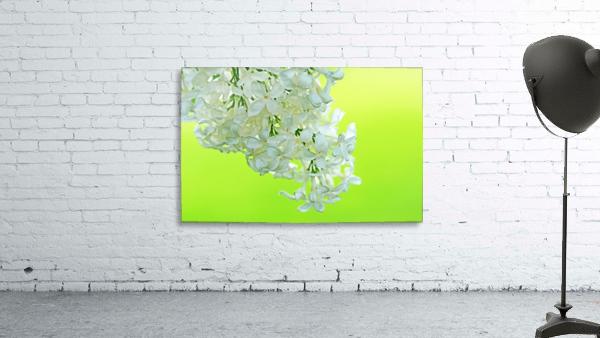 Cool White Lilac On Lemon Lime