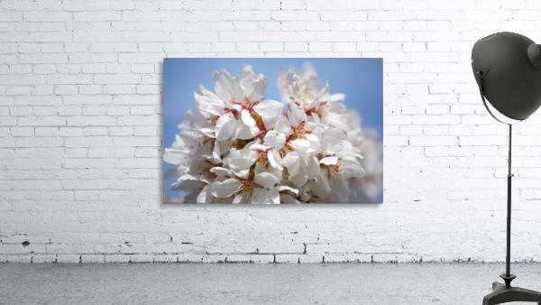 Flower Mix 09