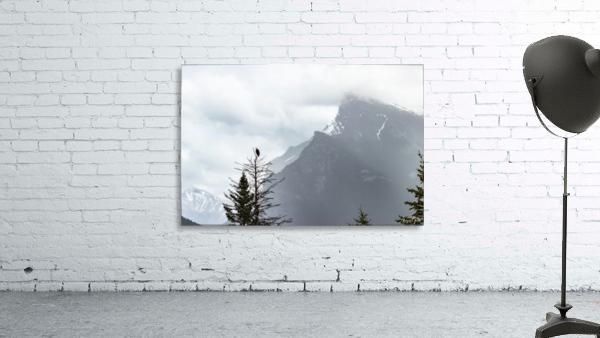 Bald Eagle In Banff National Park