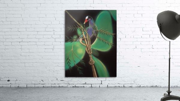 purple gallinule