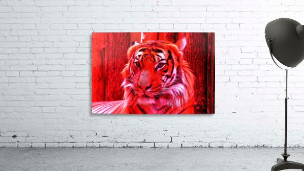 Rare Red Tiger