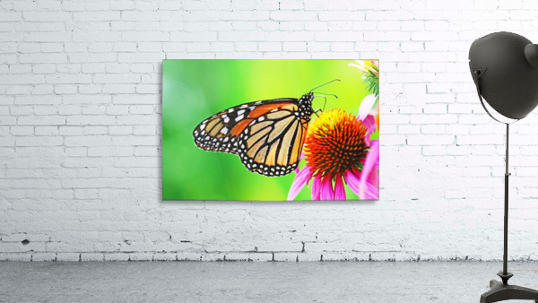 The Beauty Of The Monarch Butterfly
