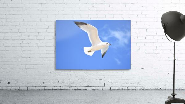 Seagull Overhead