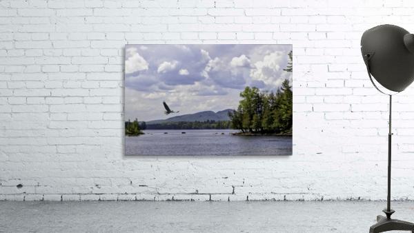 Eagle on Lake