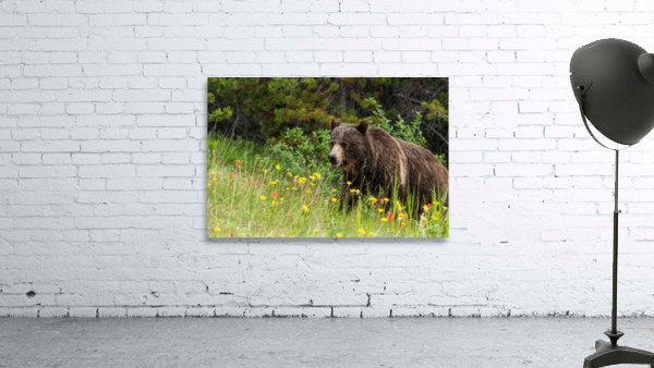 Grizzly Bear Sow 142  IMG_5130
