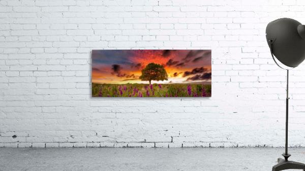 Foxgloves at sunset