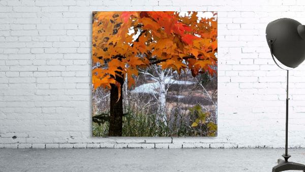 Autumn at Lake Superior