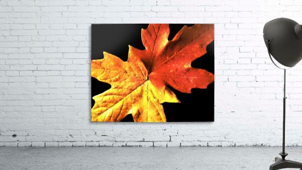 Fall Maple Leaves 3