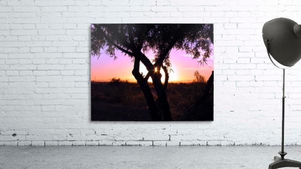 Tamarisk Sunset