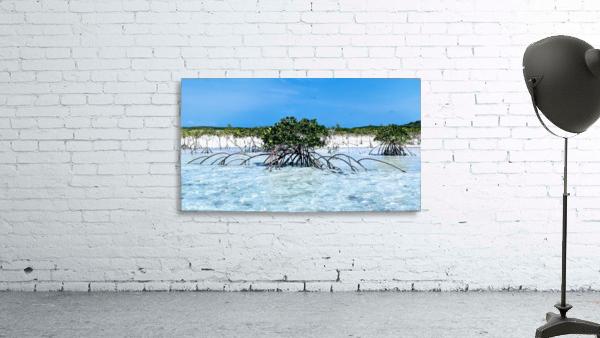 Mangroves in Estuary
