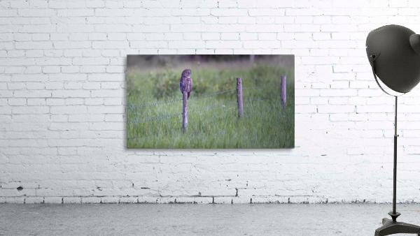 0077 - Great Grey Owl Fence Line Hunter