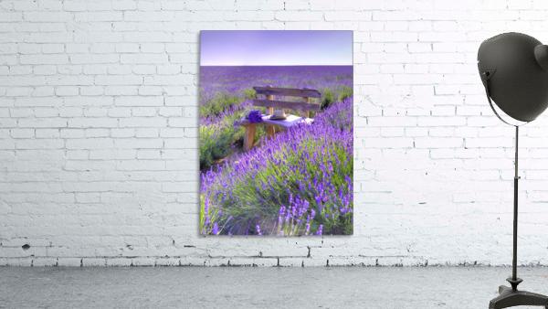 Bench in Lavender field