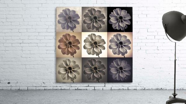 Collage of Dahlias flowers