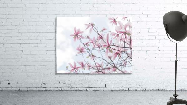 Magnolias against sky