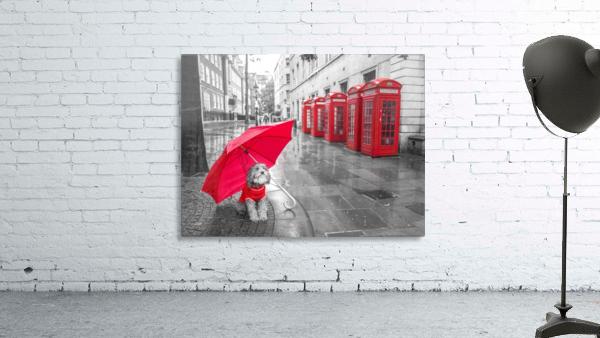 Dog with umbrella on London city street