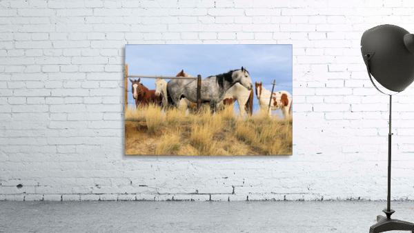 Little Bighorn Ponies