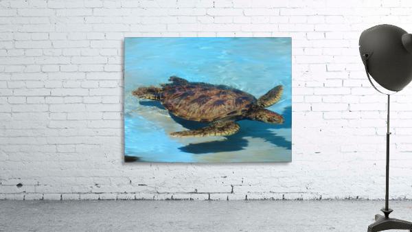 Sea Turtle - Natural World Kids Gallery
