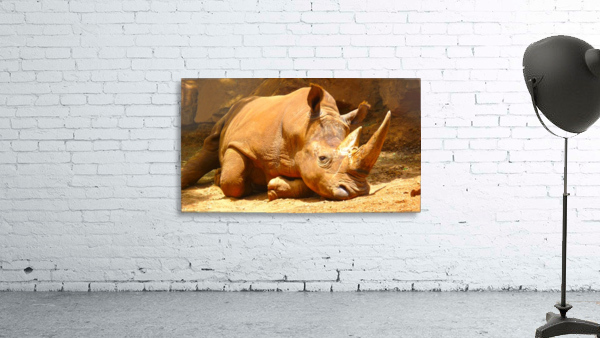 Rhino - Natural World Kids Gallery