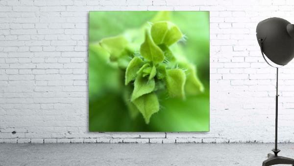 24_Green_Plant_6772_SQUARE