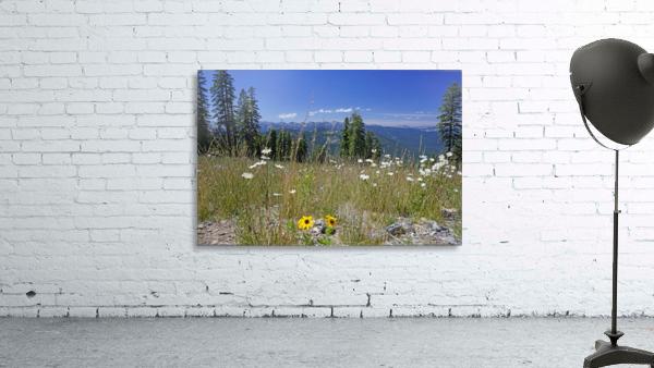 Sierra Nevada in Spring 5 of 8