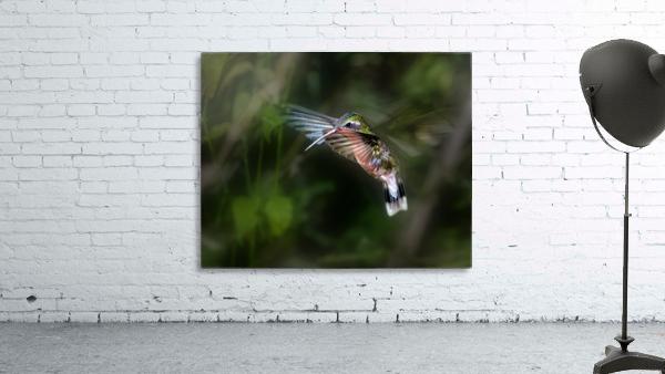Hummingbird 1B by Leigh Pelton