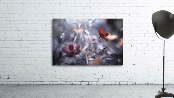 Une Fleur, une Histoire by Fabien BRAVIN