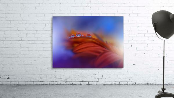 Metamorphosis by Juliana Nan