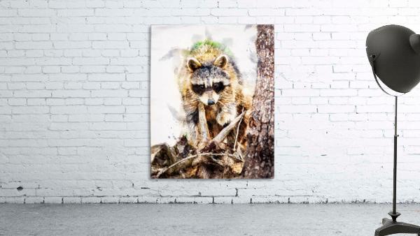 Raccoon In The Woods