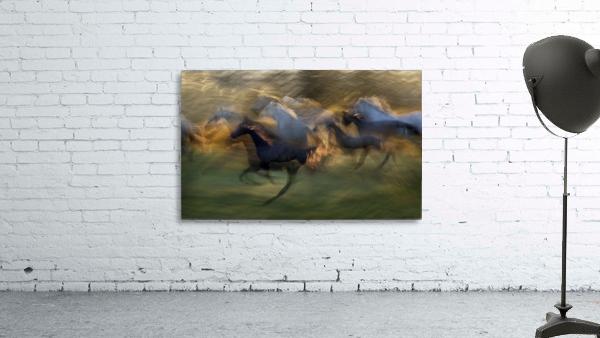 fiery gallop by milan malovrh