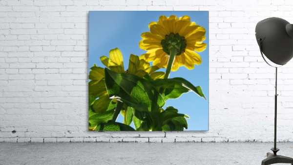 Summer Sky Flowers 8 AUG 2020